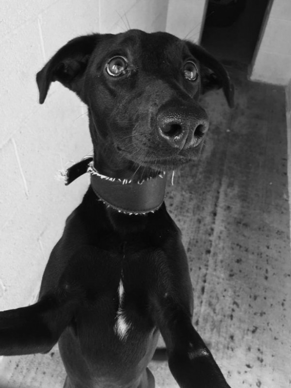 **ADOPTED** JASMINE – beautiful, active 8 month old ...